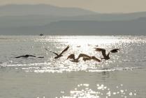 Утро Гусиного озера