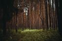 Луч света в темном царстве леса