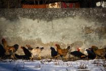 Зима в Северной Осетии