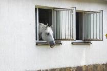 Это, что ли, окно в Европу?