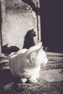 Черное и белое