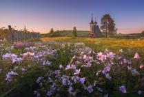 Цветы Русского Севера