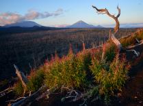 Танец мёртвого леса