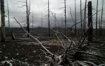 Мёртвый лес.
