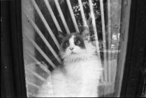 Безумный кот