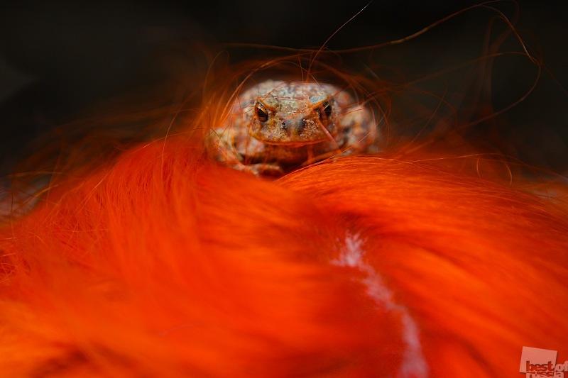 Лягушка в огне