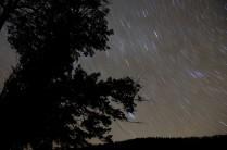 Старый тис под звёздным небом