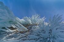 Ice koralls