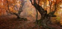 Стража леса