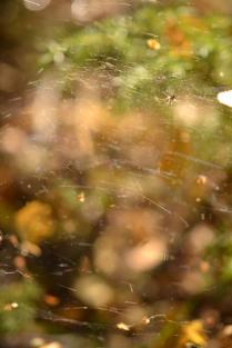 Осенний вихрь
