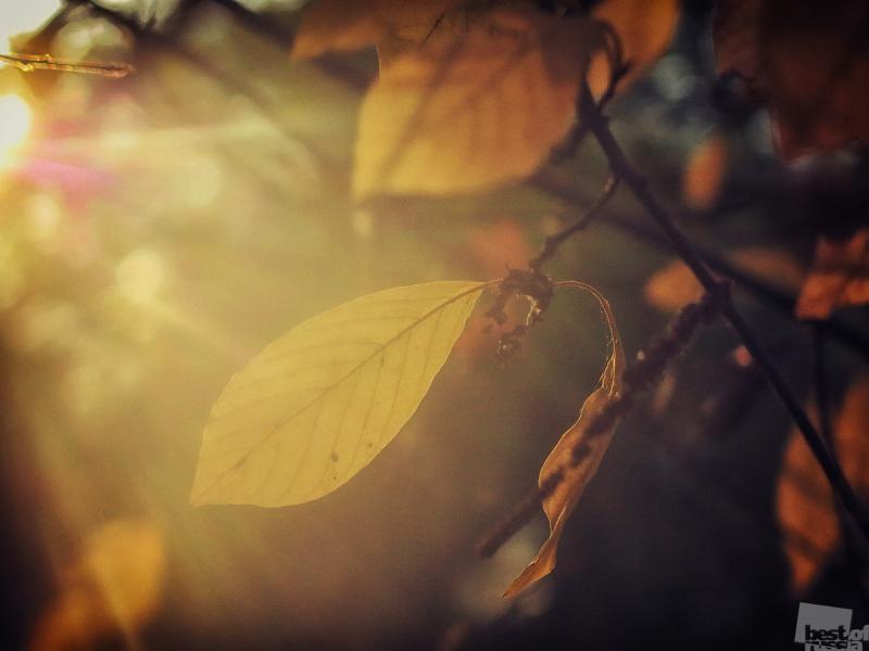 Золотой закат, золотой листок
