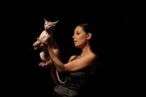 """О кошках или На выставке """"Высокая мода для животных"""""""