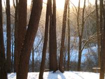 Золотой снег