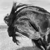 Чувство ветра