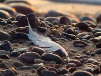 Вокруг вода песок и камни...