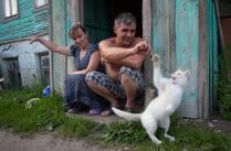 Игра с котом