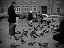 Московские голуби