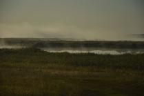 туман в степи