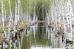 Майская акварель