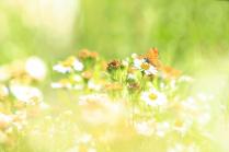 Цвет лета