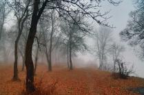 Седая осень
