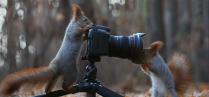 Фотограф, модель