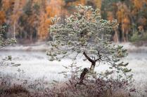 Лёгкое прикосновение зимы