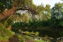 Озеро Родниковое