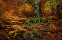 Загадочный лес Демерджи