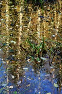 Красоты болот