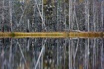 Осенний штрихкод