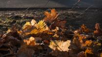 догорающая осень