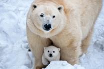 Медведица и ее дочка