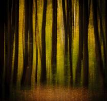 Зловещий блеск и пестрота дерев,  Багряных листьев томный, легкий шелест....