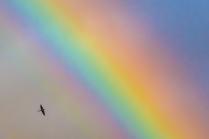 К радуге