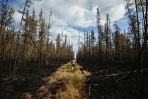 Последствия лесного пожара.