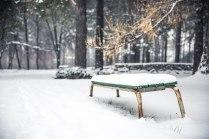 Первый снег в Академгородке