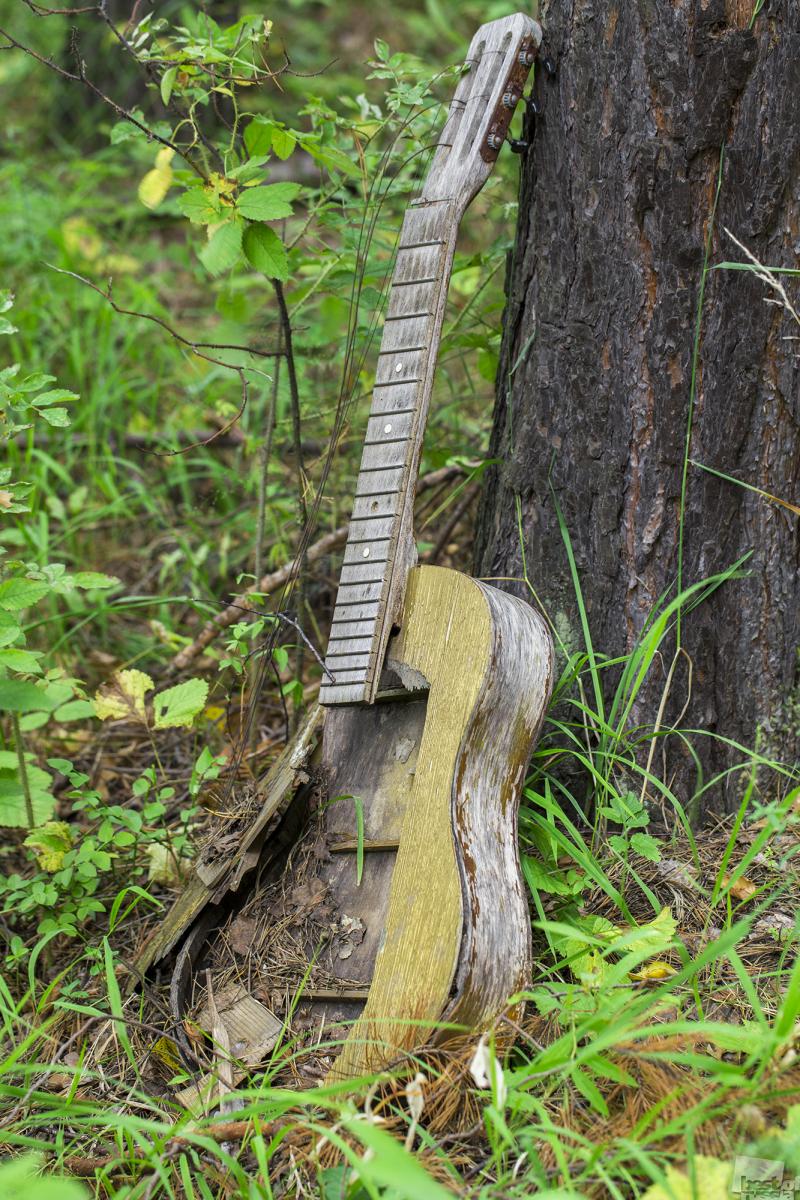 Звуки леса...