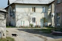 Старые дома и черный кот.