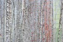 Birch oasis
