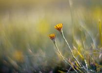 Цветы на закате