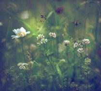 В стране дремучих трав