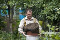 Когда роятся пчелы
