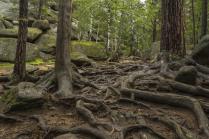 Зачарованный лес