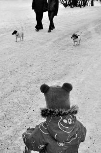 Есть мишки, не впадающие в спячку зимой