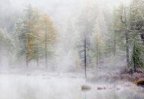 Белый  туман