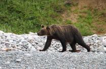 Медвежья зарядка.
