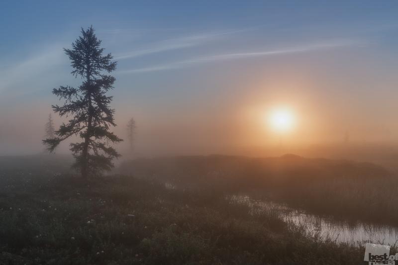 """""""Morning Dawn"""""""