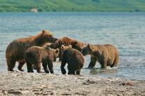 Камчатка. Медвежий хоровод.