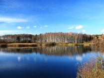 Зеркало леса
